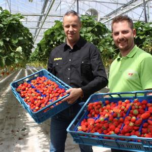 Aardbeienbedrijf Manders